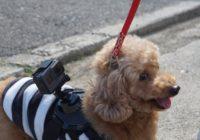 GoPro HERO5 BLACKをドッグマウントハーネスに装着して愛犬のお散歩